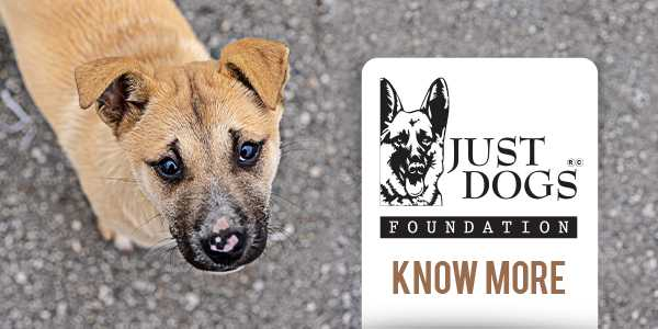 Just Dogs Foundation